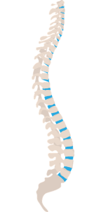 spine-1925870_640.png